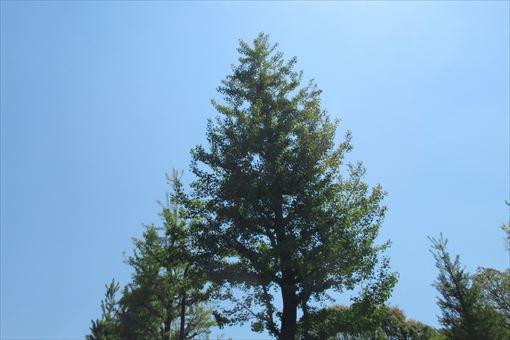 200425tree.jpg