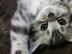 猫毬さんの画像