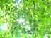 小峰庭苑さんの画像