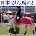 HorsePhotoさんの画像