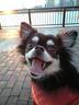 yellow_dogさんの画像