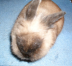 ウサギ小屋さんの画像