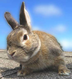rabbitnoseさんの画像