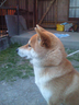 SIBA-dogさんの画像