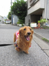 名犬ゴン太の兄さんの画像