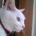 whitecatさんの画像