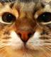 雪雫さんの画像