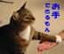 mahimahiさんの画像