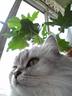 銀猫さんの画像
