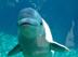 イルカさんの画像