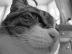 ネコさんの画像