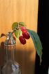 山茱萸さんの画像