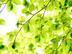 白木花枝さんの画像