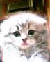 ushigome-mさんの画像