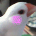 枝 豆仔さんの画像