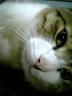 hukayoiさんの画像