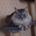 猫の友 メルティー