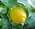 lemon123さんの画像