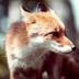 FOXさんの画像