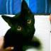 mamaruさんの画像