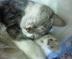 taro-chibiさんの画像
