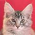 月刊「とら」副編集長さんの画像