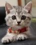 島猫さんの画像