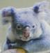 KOALAさんの画像