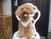 Bobby-the-Dogさんの画像