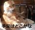 きーちゃんさんの画像