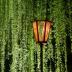 bambooさんの画像