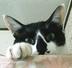 Catcat44さんの画像