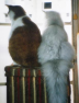 猫ふみふみさんの画像