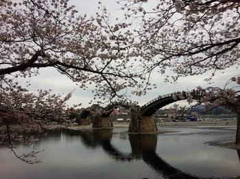 錦帯橋2.jpg