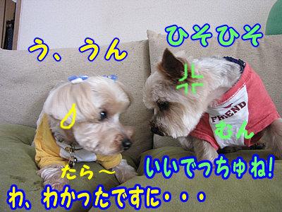 IMG_0880.jpg