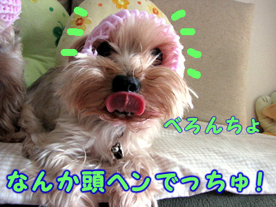 IMG_1311.jpg