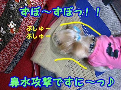 IMG_4406.jpg