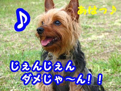 IMG_4721.jpg