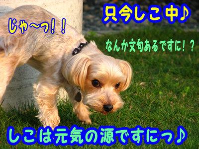 IMG_4782.jpg