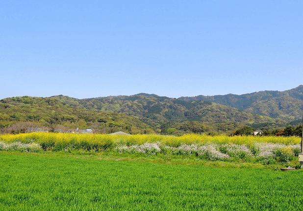 春の野山.jpg