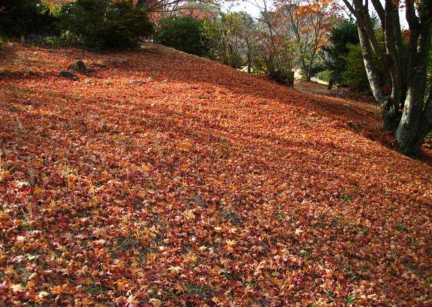 鏡山の紅葉4.jpg