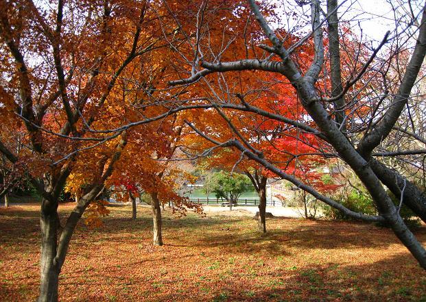 鏡山の紅葉5.jpg