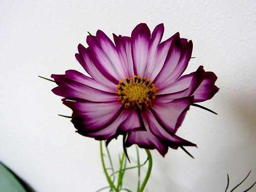RIMG0153-1.jpg