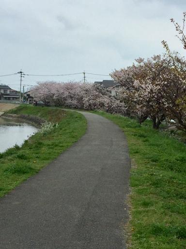 someiyoshino4.jpg