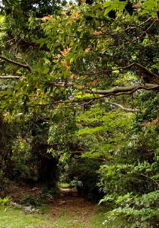 17 森林浴的な廃墟探検.JPG