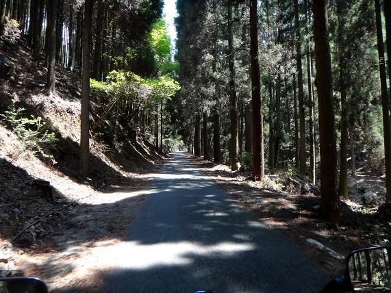 33 やっぱり林道らしくなってきやがった.JPG