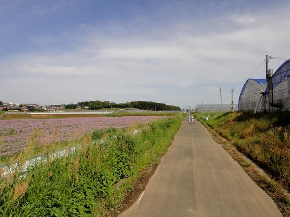 かなり長閑なサイクリングロードです.JPG