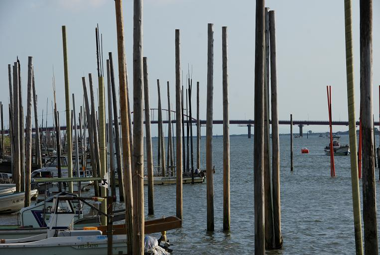 大川周辺の船溜まりの特徴はこの棒.JPG