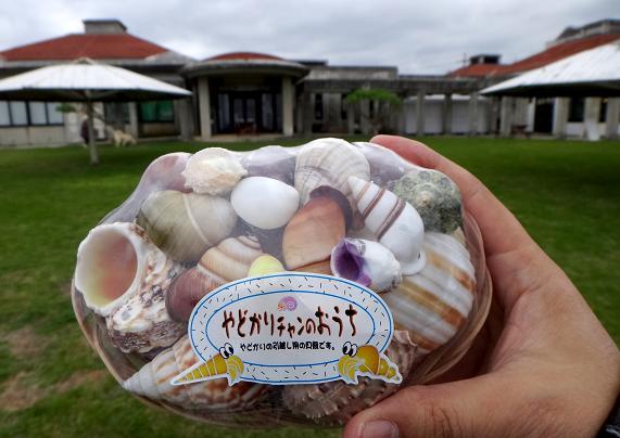 宮古島の貝.JPG