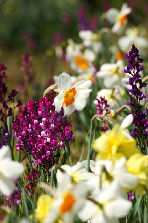 心が綺麗な人は花が好き.JPG